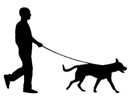 Dog Walking Business